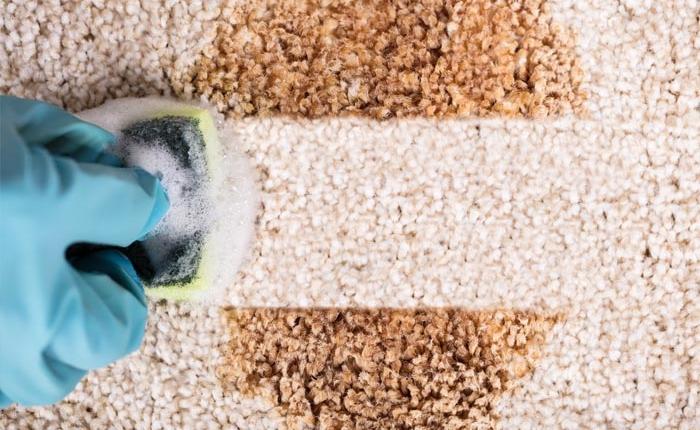 Schreiber-Diesntleistungen-Teppichreiniger